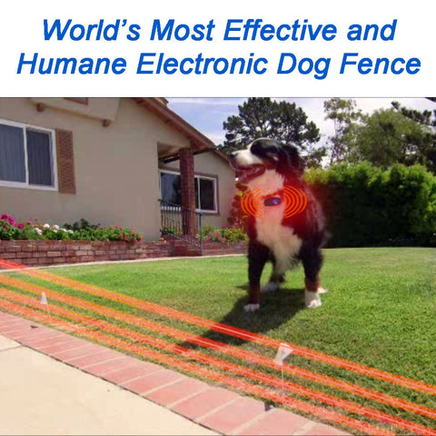 high tech pet bluefang remote training and electric dog fence collar at pet pro supply co