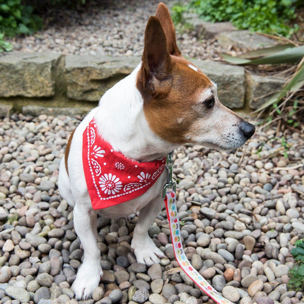 Small Red Paisley Dog Bandana