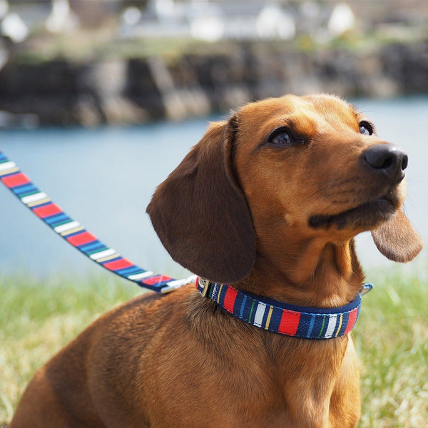 Stripy Dog Lead