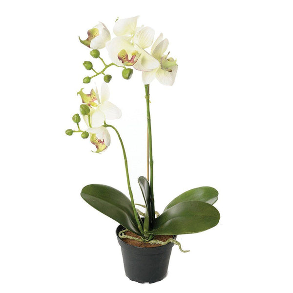 Orchid in Pot Off-White