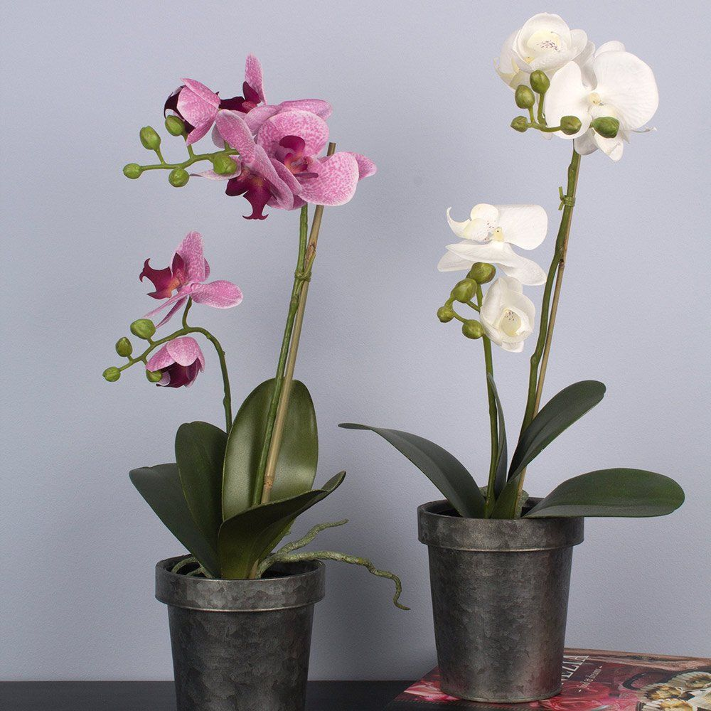 Orchid in Pot Off-White & Pink