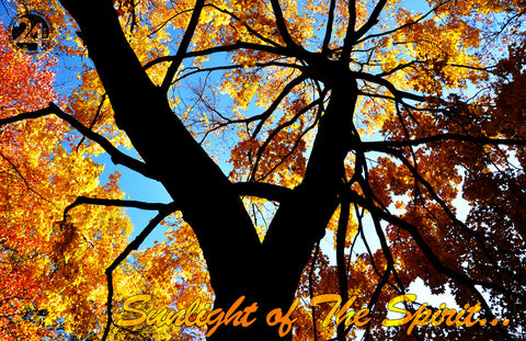 Inspirational Photo - Sunlight of the Spirit | Recovery Gift