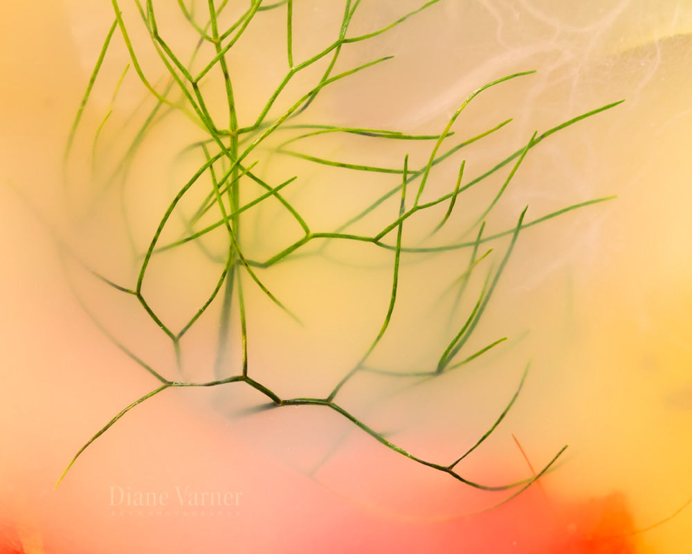 Immersed In Memories - 13 - Diane Varner Art ~ Photography ~ Fine Art Prints