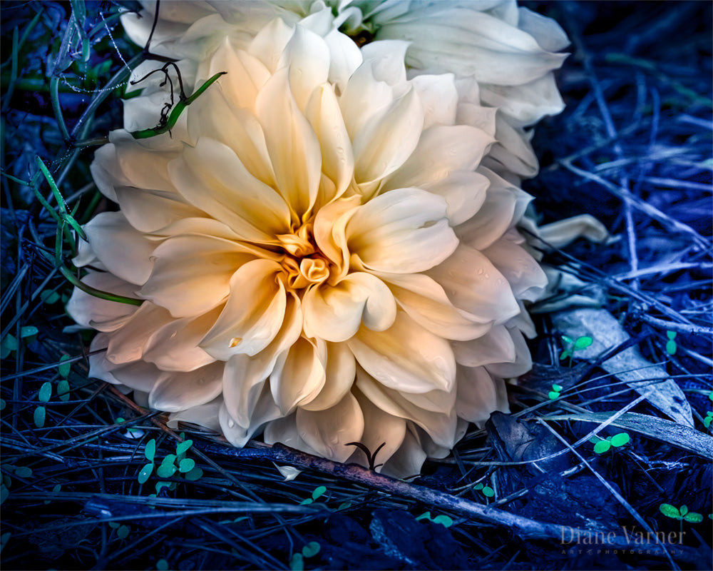 Kindness Will Prevail - Diane Varner Art ~ Photography ~ Fine Art Prints