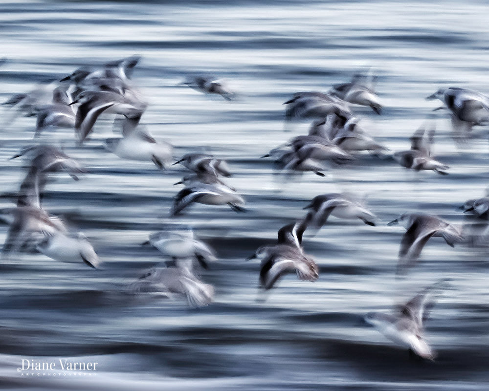 One In Motion - Diane Varner Art ~ Photography ~ Fine Art Prints
