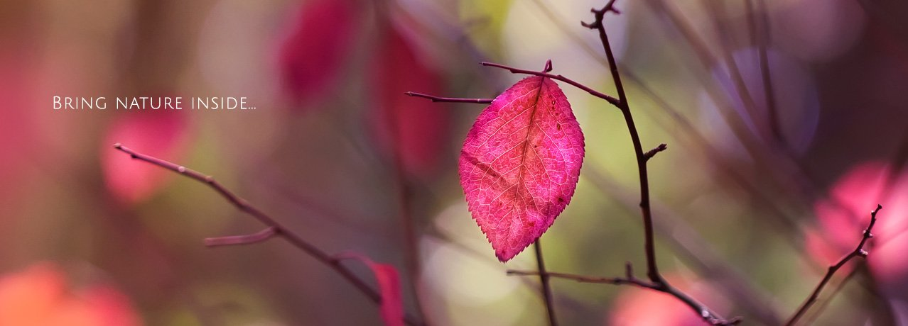 Fall Foliage Fine Art Prints - Wall Decor