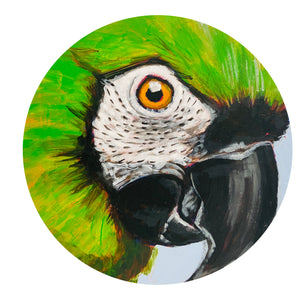STRIKING Chestnut Fronted Macaw PAINTING Original ONE OF A KIND