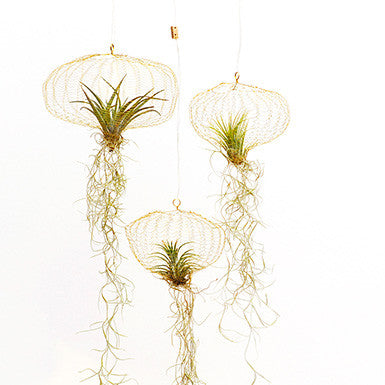 Carolijn-Slottje-Goeds-Air-Planting-Messing-Plantobject-Koper-object-Projectinrichting-Tillandsia-luchtplantje-messing-groen-object-voordeliger-dan-loods-5