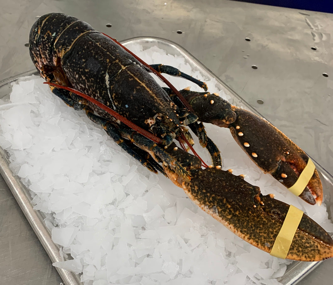 Premium Quality Scottish Lobster (sizes between 600g-1kg)
