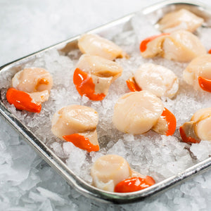 King Scallops (5 scallops per 250g pack)