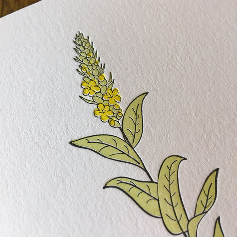 Mullein Wildflower Letterpress Card