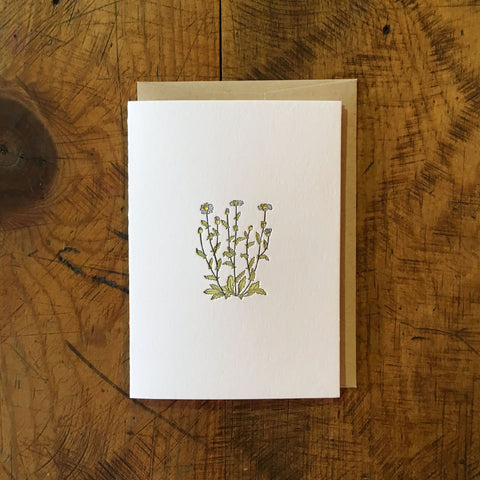 Oxeye Daisy Wildflower Letterpress Card