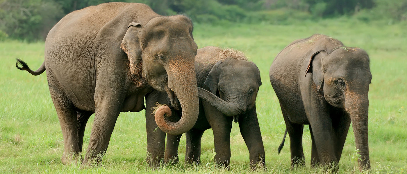 One percent for the elephants