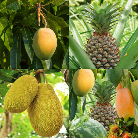 Tropical Fruit Variety Pack