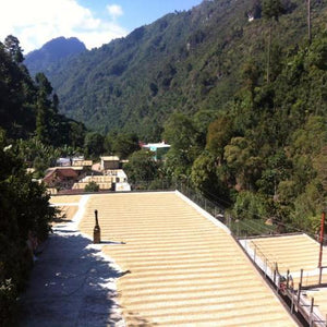 Guatemala Huehuetenango Coffee - Serve Coffee