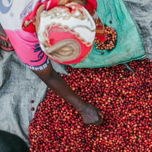 Burundi Nkonge Hills Long Miles Nini Natural- Green coffee