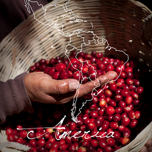 Guatemala Finca Guayabales - Direct Relationship - Serve Coffee