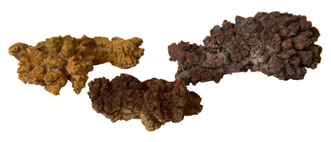 Coprolite: Fossilized Prehistoric Poop, Well Done Goods