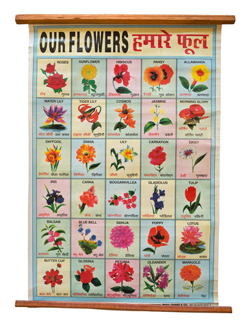 Indian Educational Chart: Flowers. Vintage Science Poster, Well Done Goods