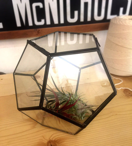 "Geometric Glass Terrarium, 8"" Tabletop Prism"