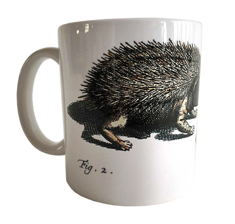 Albertus Seba Hedgehog Print Mug, Natural History Coffee Cup. Well Done Goods