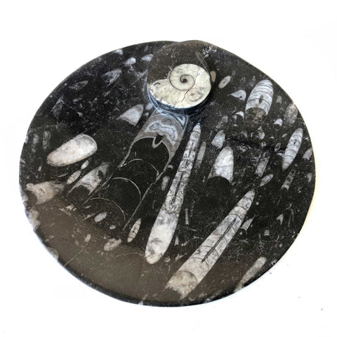 Hand Carved Fossil Dish, Smudging Bowl: Orthoceras & Ammonite Black Marble Plate, round