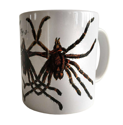 Albertus Seba Tarantula Print Mug, Natural History Coffee Cup. Well Done Goods