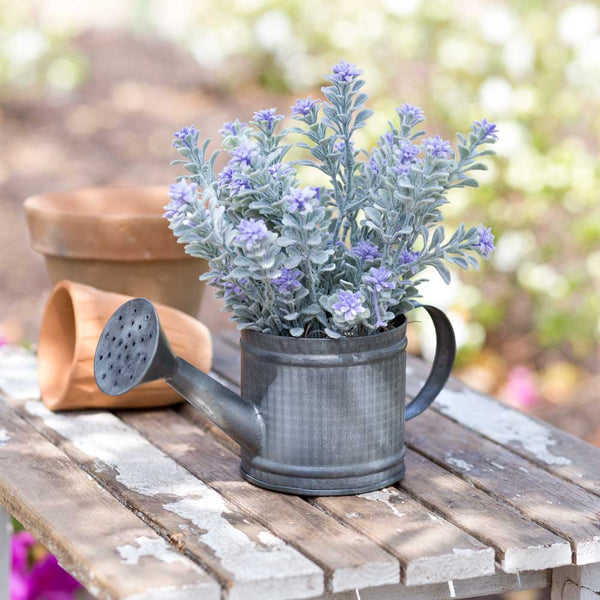 Mini Watering Can - Box of 2
