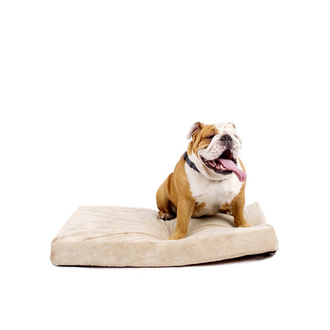4 Inch Thick Memory Foam Orthopedic Medium Size Dog Bed