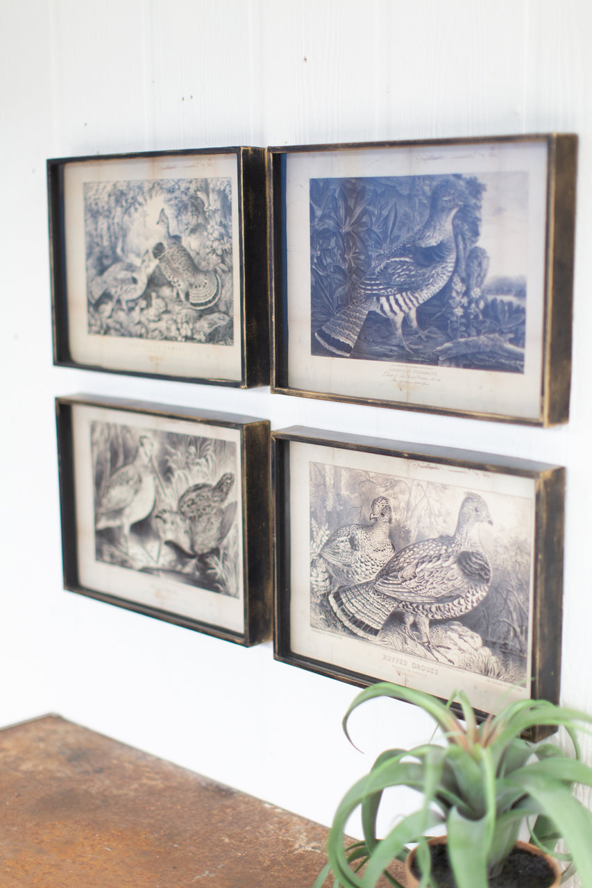 Set of 4 Bird Prints Under Glass