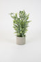 Artificial Boxwood In A Cement Pot