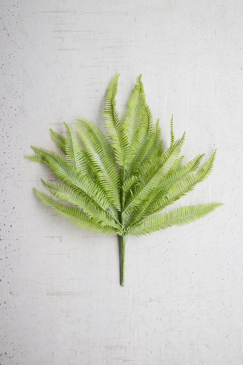 Set Of 6 Flat Ferns