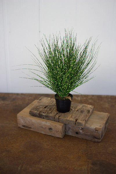 "Set Of 4 14.5"" Grass With Plastic Pots"