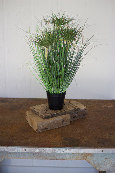 "Set Of 4 24"" Grass With 5 Heads With Plastic Pots"