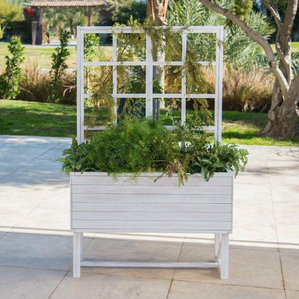 Raised White Beach Wood Eucalyptus Planter with Trellis