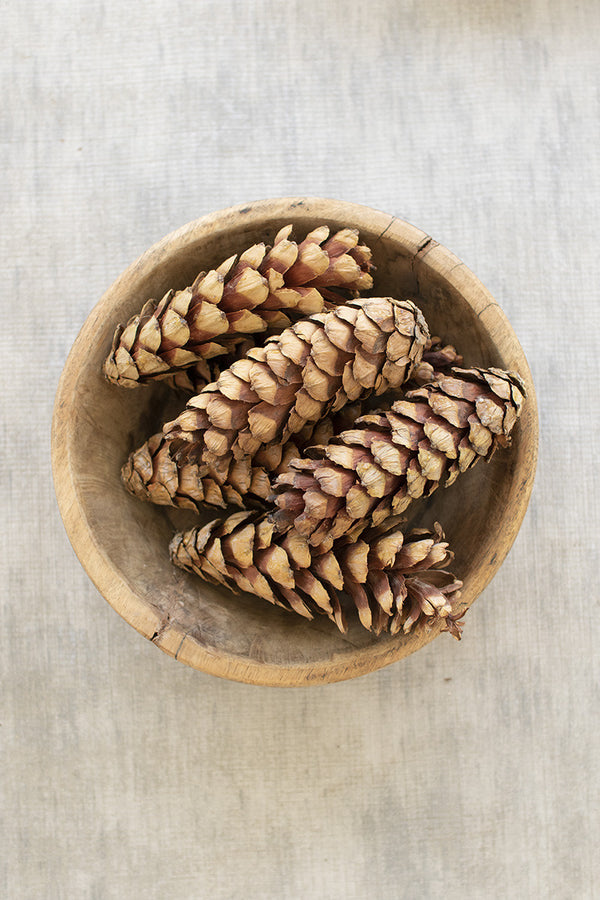 Bag Of 72 Strobus Pine Cones  -  Natural