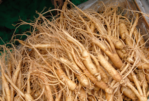 ginseng root being sold at market