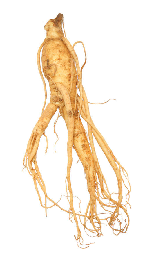 Ginseng root - Whole Herb