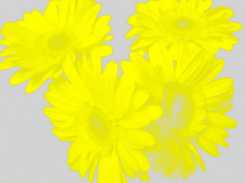 Yellow Bouquet [Limited Edition of 10] by Alaina