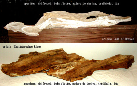 Driftwood Study [Limited Edition 2/10] by Alaina Williams