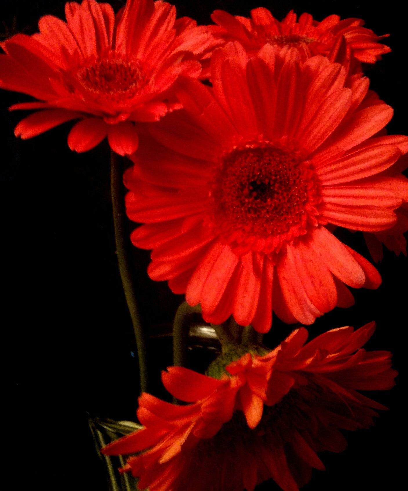 Four Gerbera Daisies Red Pt.1 [Limited Edition of 10]