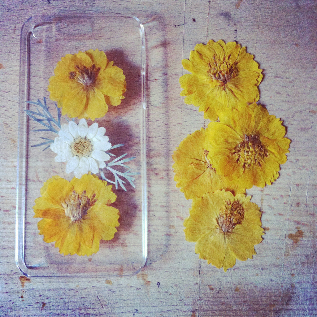 Yellow cosmos, silver leaf and daisy