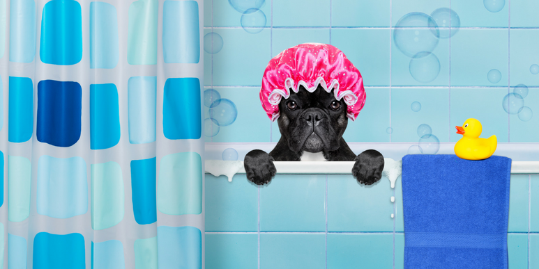 Dog In Bath Tub Wearing A Shower Cap