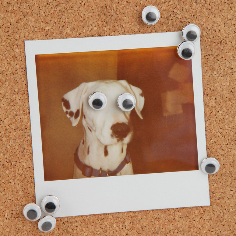 Googly Eyes On Dog Picture