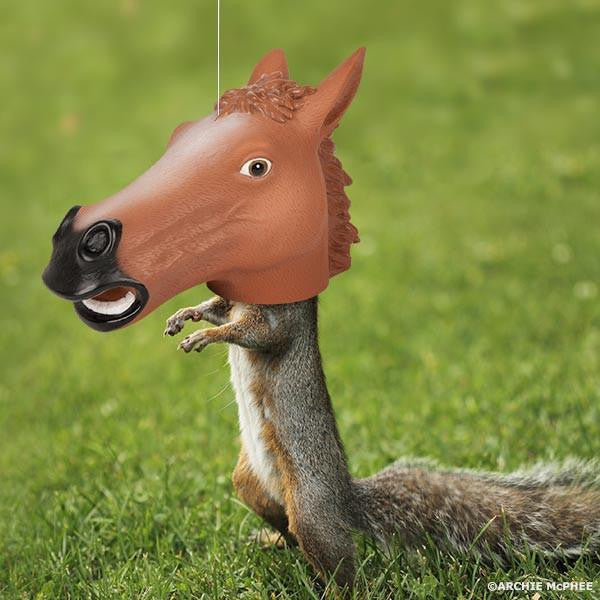Squirrel Wearing Horse Head Squirrel Feeder