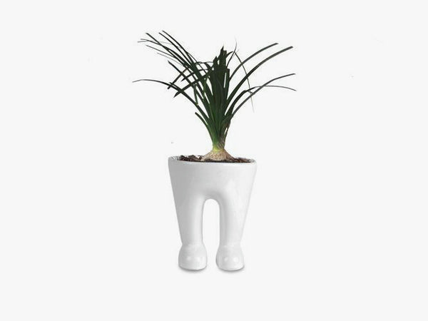 Sr. Maceta | Pants Plant Pot