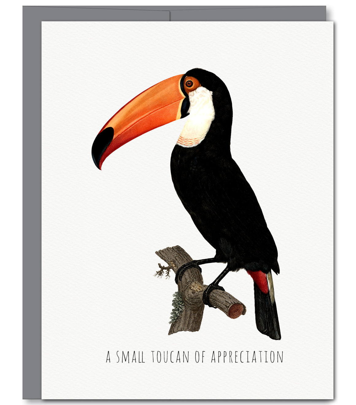 Toucan Thank You Glitter Greeting Card | Sylvan Gate Design