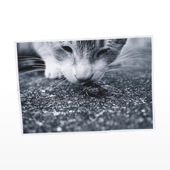 Canvas Print in a single sheet