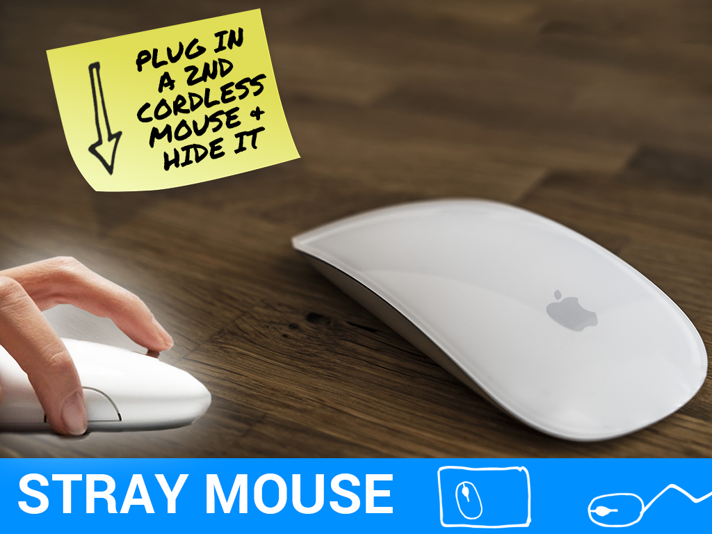 Stray Mouse Prank