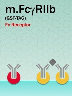 Mouse FcγRIIb (GST-Fusion)